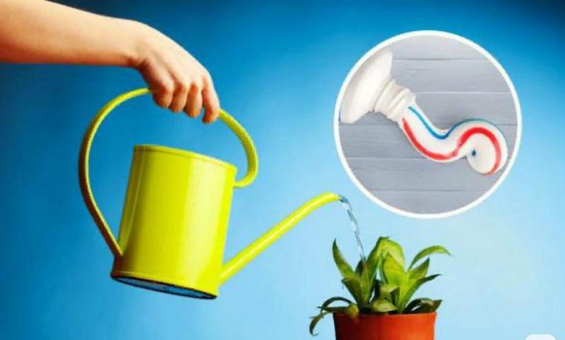Комнатные растения и зубная паста