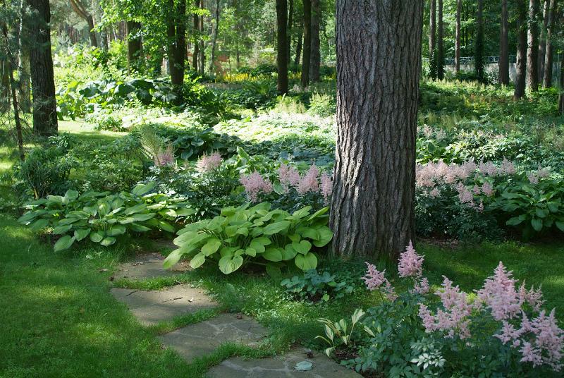 Тенелюбивые растения в саду