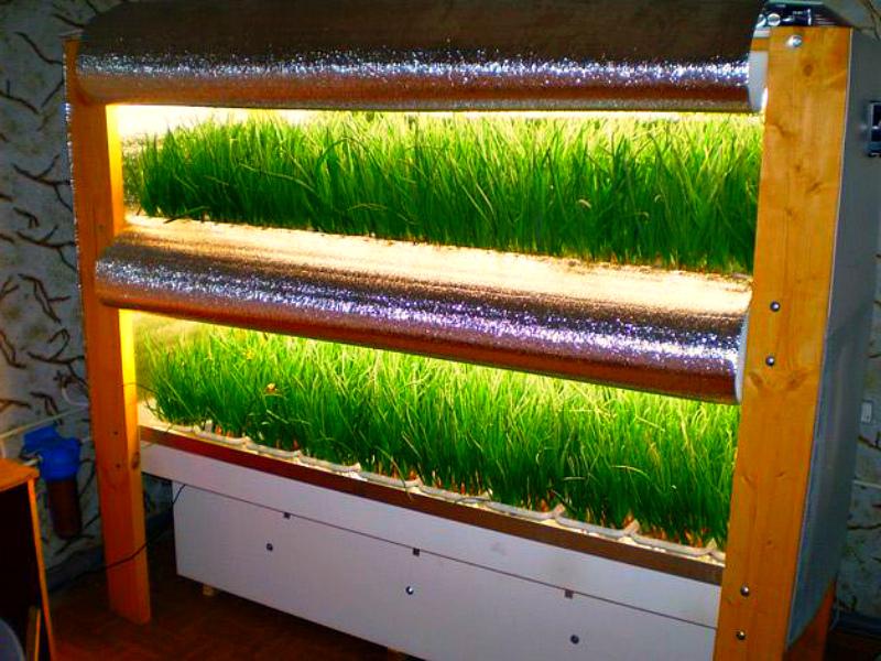 Что можно выращивать в подвале гаража осенью и зимой?