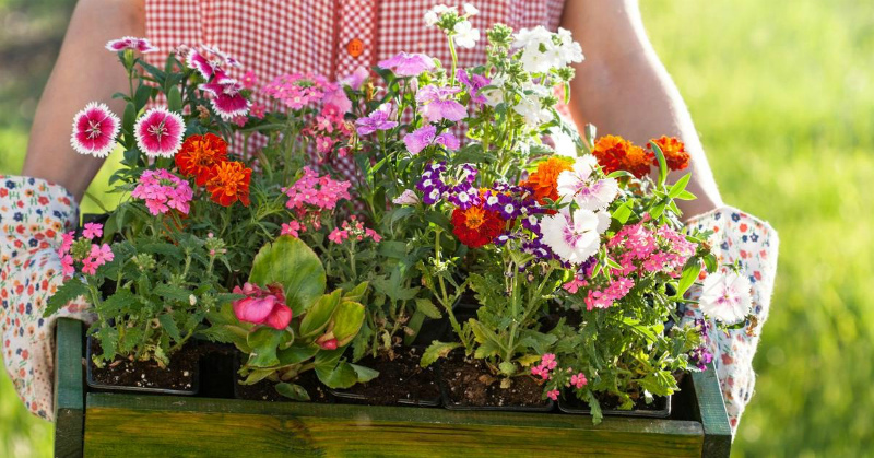Перекись водорода и рассада цветов