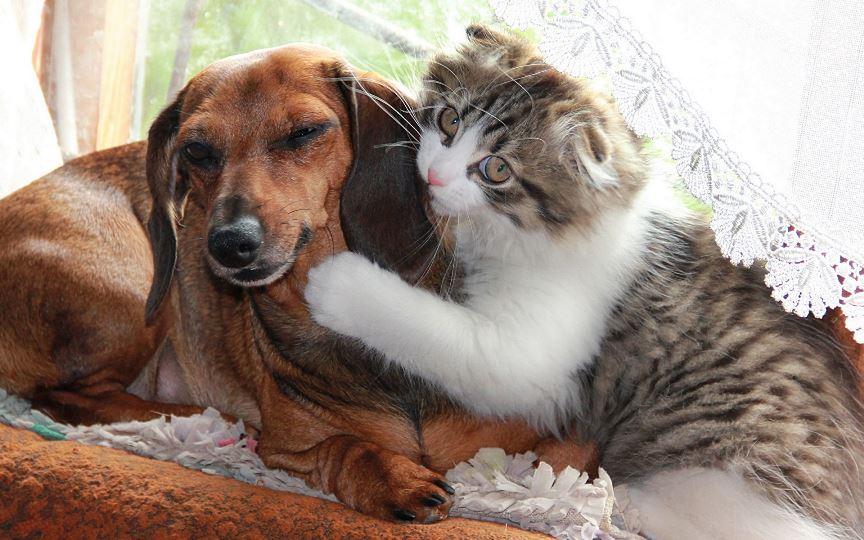 Животные в доме