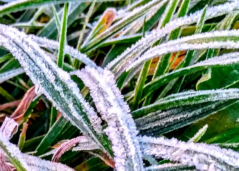 Криопротекторы - защита от заморозков