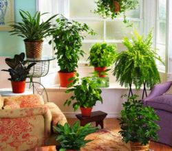Эффективные подкормки комнатных цветов из привычных продуктов