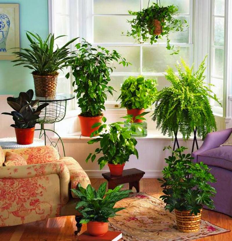 Удобрения для цветов в домашних условиях