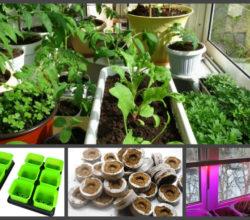 Что нужно подготовить для успешного выращивания рассады
