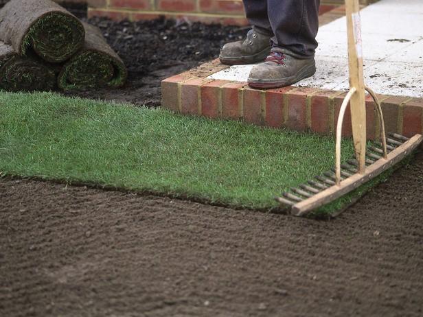 Как выращивать газон в домашних условиях 777
